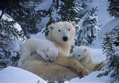 Jeux de puzzle : famille ours