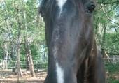 Puzzle gratuit cheval mon ami