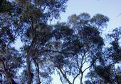 Puzzle Nature Australienne