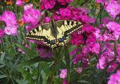 Jeux de puzzle : le papillon de tonton Daniel