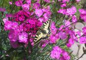 Jeu puzzle papillon fleurs de tonton daniel