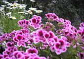 Puzzle en ligne Fleurs à Nice