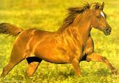 Jeux de puzzle : cheval