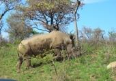 Puzzle Puzzle Rhinocéros