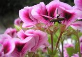 Puzzle fleur et insecte
