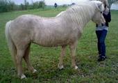 mon cheval (dior )