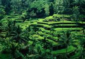 Jeu puzzle Vert indo
