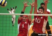 Puzzles chat au voley ball