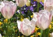 Puzzle en ligne fleurs de printemps