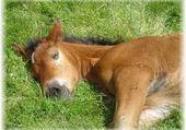 Jeu puzzle poneys love