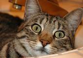 Puzzle Puzzle en ligne petit chaton