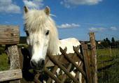 Puzzle Puzzle gratuit petit poney