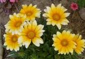 jolies fleurs de tonton daniel