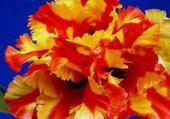 Puzzles fleur5