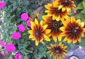 Puzzle fleurs à Nice