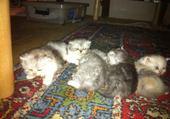 Puzzle les chatons d'Etoile