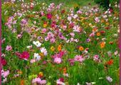 Puzzle tapis de fleurs