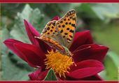 Jeux de puzzle : papillon et fleur