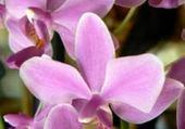 Puzzle Puzzle en ligne cascade de fleurs