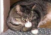 Jeux de puzzle : haha le chat