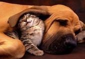 Jeu puzzle Entre chien et chats