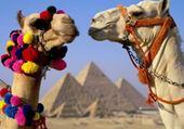 Puzzle madame et monsieur chameau