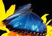 Puzzle Puzzle papillon