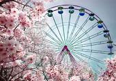 grande roue fleurie