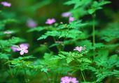 Puzzle macro fleur