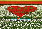 Puzzle gratuit coeur de fleurs
