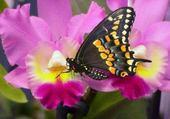 papillon et orchidée