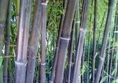 Puzzle Jeu puzzle bambou