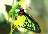 Puzzle superbe papillon