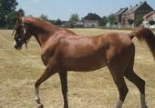 Puzzle mon cheval