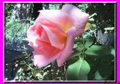 Jeu puzzle rosa
