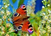 Puzzle Jeux de puzzle : papillon