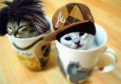 les petit chat dans les tase