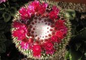 Puzzles mon beau cactus