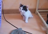 Taquin petit chat