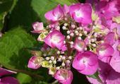 Jeux de puzzle : magnolias