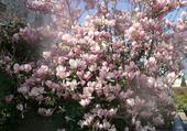 Puzzle magnolia neuilly