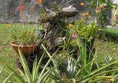 Puzzle autres plantes