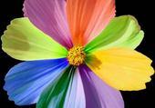 Taquin fleur de couleur