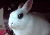 Puzzle Lapin SNOWY