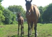 Jeux de puzzle : chevaux magnifique