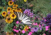 Puzzles beauté nature à Nice