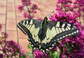 Puzzle fleur et papillon