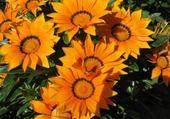 Puzzles fleurs jardin