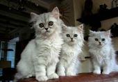 Taquin les chats