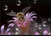 Puzzle gratuit abeille et fleur